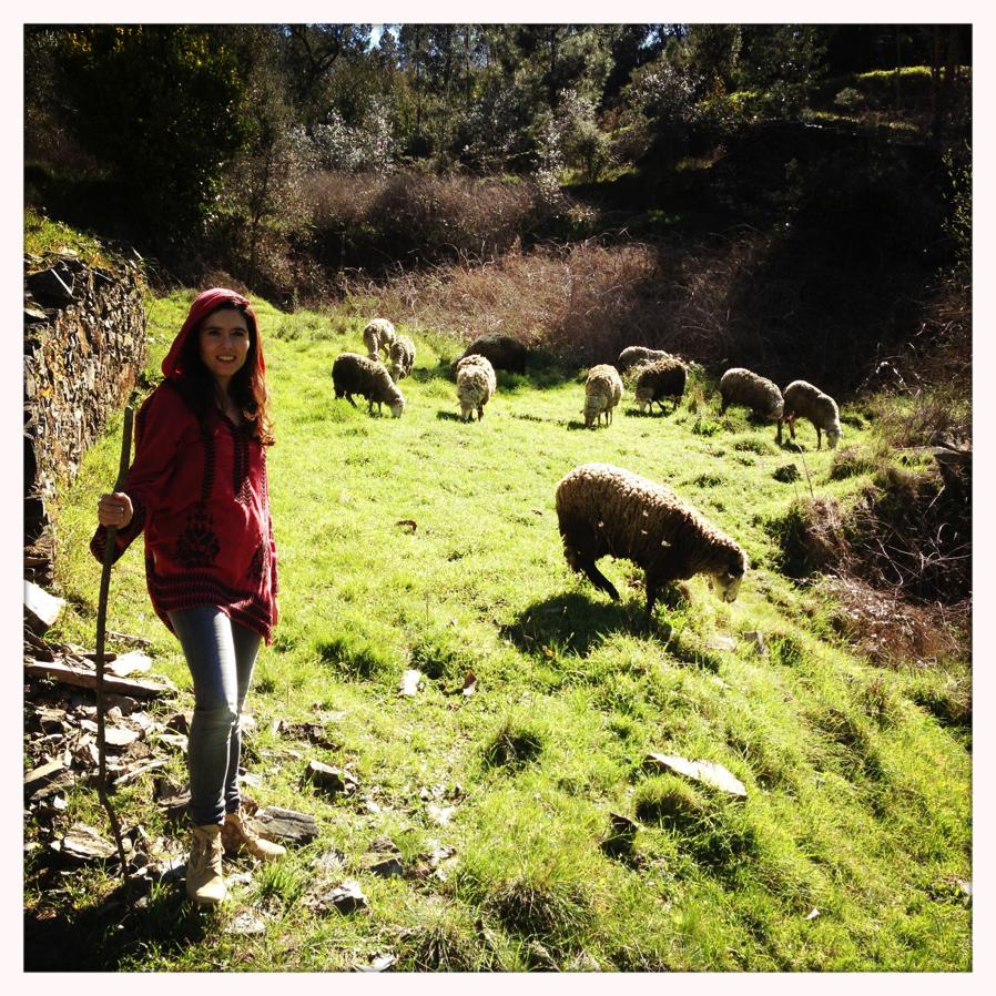 Guardar_ovelhas4