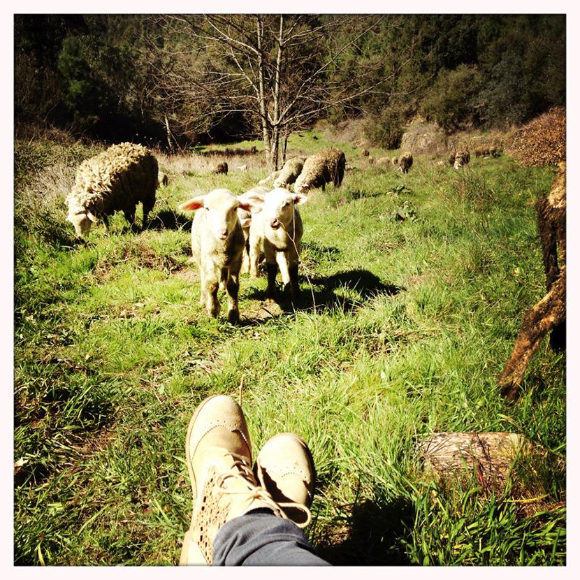 Guardar_ovelhas5