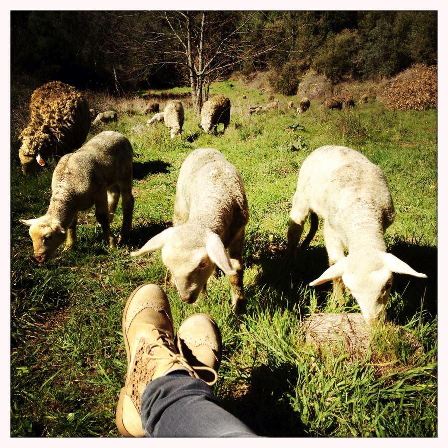 Guardar_ovelhas8