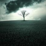 Eu Sou a Árvore