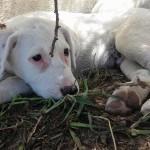 UPPA – União para a Proteção dos Animais