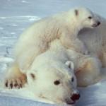 O gelo do planeta a derreter?!