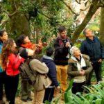 À descoberta de Plantas e Flores Comestíveis