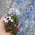 Plantas Medicinais na Quinta da Riba Fria