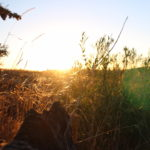 Viver numa EcoAldeia