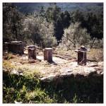 A importância das abelhas