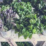Dia de mercado nas hortas