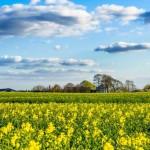 Dinamarca: o primeiro o país da agricultura biológica!!!