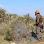 Cuidadores de Florestas