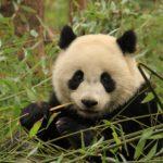 Salvar os Pandas
